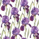 Bloemen naadloos patroon met hand getrokken waterverf violette iris Stock Fotografie