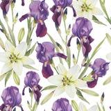 Bloemen naadloos patroon met waterverfirissen en witte lelies Royalty-vrije Stock Fotografie
