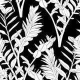 Bloemen naadloos patroon, zwart-witte spleet-blad Zamioculcas-installatie royalty-vrije illustratie