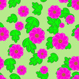 Bloemen naadloze achtergrond Stock Afbeelding