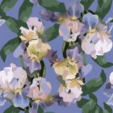 Bloemen naadloze het behangbloemen van de patroondecoratie Royalty-vrije Stock Foto