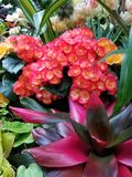 Bloemen Natuurlijke schoonheid royalty-vrije stock fotografie