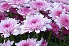 Bloemen in ochtenddag Royalty-vrije Stock Afbeeldingen