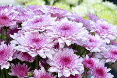 Bloemen in ochtenddag Royalty-vrije Stock Fotografie