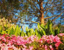 Bloemen onder de boom Royalty-vrije Stock Foto