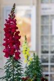 Bloemen onder het venster Stock Afbeeldingen