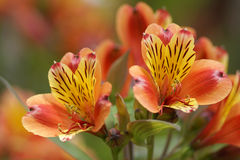 Bloemen ondiepe diepte van gebied Royalty-vrije Stock Fotografie