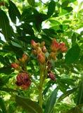 Bloemen ongeveer om bij zonlicht te bloeien royalty-vrije stock afbeeldingen