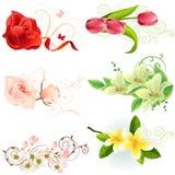 Bloemen ontwerpelementen Royalty-vrije Stock Foto