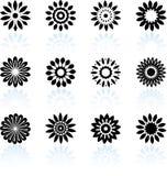 Bloemen ontwerpinzameling Stock Foto's