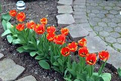 Bloemen in onze binnenplaats Royalty-vrije Stock Afbeelding