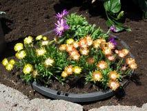 Bloemen in onze binnenplaats Royalty-vrije Stock Afbeeldingen