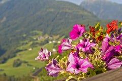 Bloemen in Oostenrijks landelijk landschap royalty-vrije stock afbeeldingen