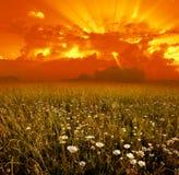 Bloemen op achtergrond van zonsondergang stock afbeelding