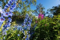 Bloemen op Alaska Royalty-vrije Stock Afbeelding