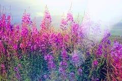 Bloemen op Alaska Royalty-vrije Stock Afbeeldingen