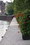 Bloemen op binnenhof Haque Stock Afbeeldingen