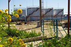 Bloemen op de achtergrond van reservoirs stock foto