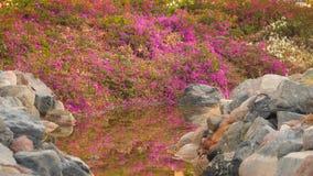 Bloemen op de bank van de stroom stock footage
