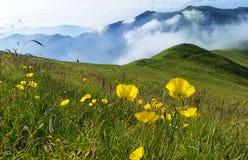 Bloemen op de berg Stock Fotografie