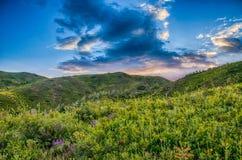 Bloemen op de berg, weide Stock Foto's