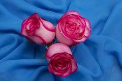 Bloemen op de blauwe achtergrond Stock Foto