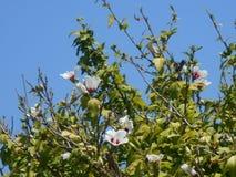 Bloemen op de boom stock afbeeldingen