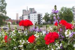 Bloemen op de brug in de zomerdag Stock Afbeeldingen