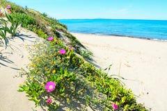Bloemen op de duinen royalty-vrije stock foto's