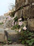 Bloemen op de Grote Muur Royalty-vrije Stock Fotografie