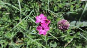 Bloemen op de hellingen van de bergen royalty-vrije stock fotografie