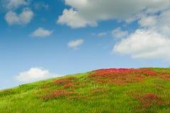 Bloemen op de heuvel Royalty-vrije Stock Afbeelding