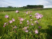 bloemen op de heuvel op een zonnige dag stock fotografie