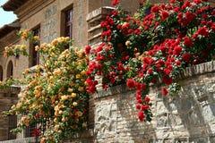 Bloemen op de huismuur Royalty-vrije Stock Afbeelding