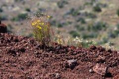 Bloemen op de klip Stock Foto