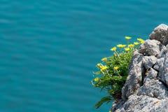 Bloemen op de klip Stock Afbeelding