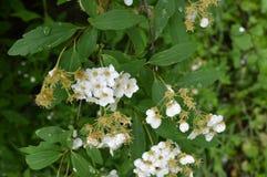 Bloemen op de lentetijd royalty-vrije stock afbeelding