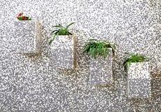 bloemen op de muur Stock Afbeelding