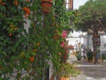 bloemen op de muur Royalty-vrije Stock Foto