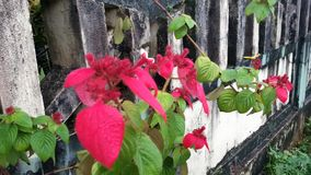 Bloemen op de omheining Stock Fotografie