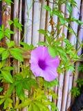 Bloemen op de omheining & x28; eenvoudige mooi maar perfect& x29; Royalty-vrije Stock Afbeelding