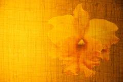 Bloemen op de oppervlakte van stoffen en lichtgeel Royalty-vrije Stock Fotografie