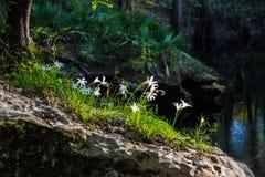 Bloemen op de rots stock fotografie
