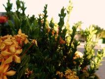 Bloemen op de stad royalty-vrije stock afbeeldingen