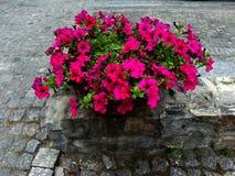 Bloemen op de stenen Royalty-vrije Stock Afbeelding