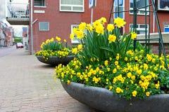 Bloemen op de straten van Gorinchem. Stock Afbeeldingen