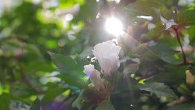 Bloemen op de struikclose-up stock videobeelden