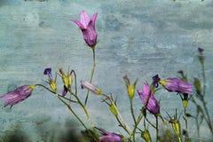 Bloemen op de textuur Stock Foto's