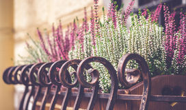 Bloemen op de vensterbank royalty-vrije stock foto's