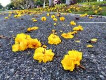 Bloemen op de weg Stock Foto's